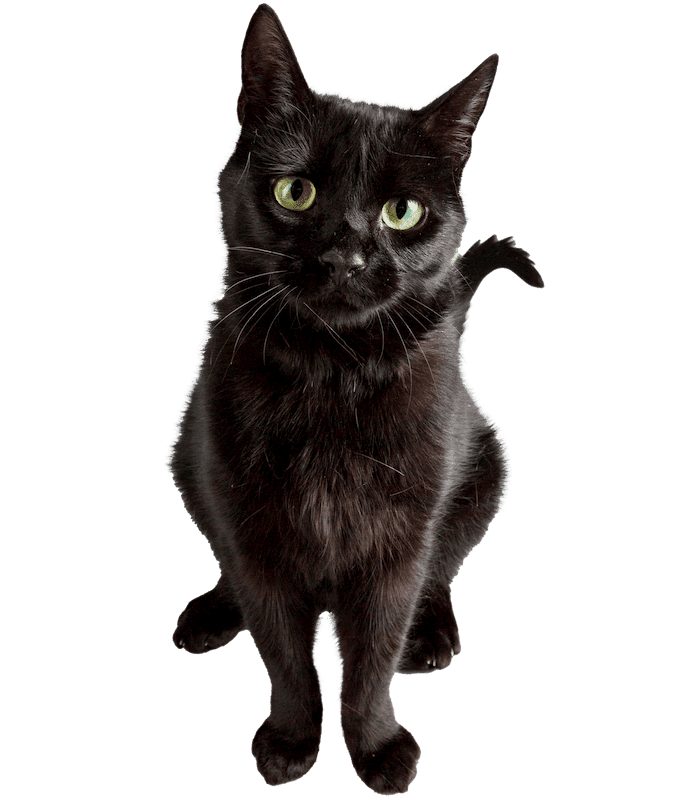 picture of a cat